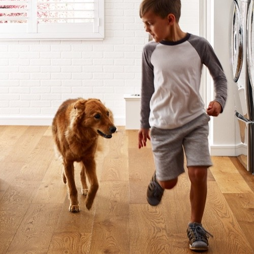 Pet friendly floor | Great Lakes Carpet & Tile