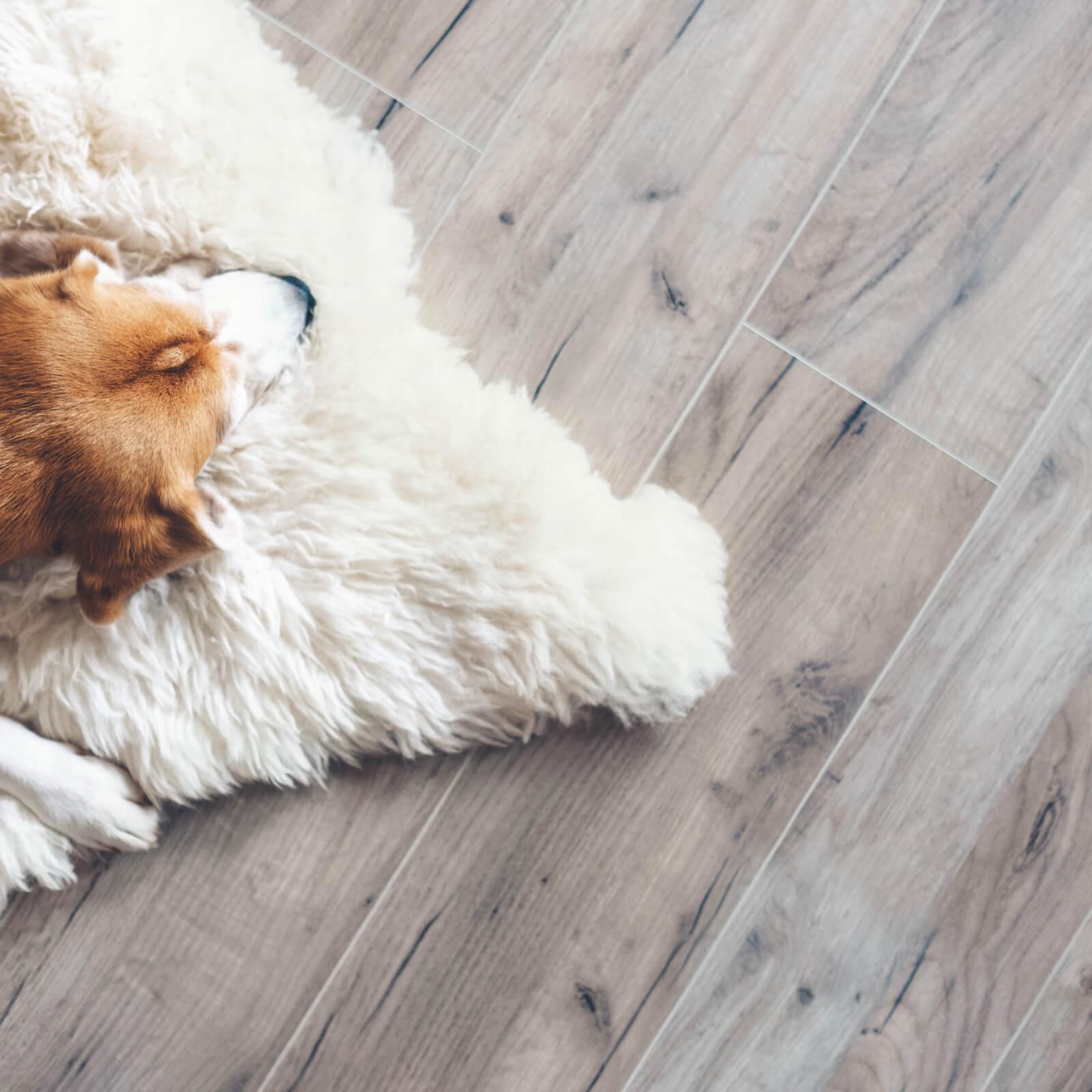 Pet friendly vinyl floor | Great Lakes Carpet & Tile